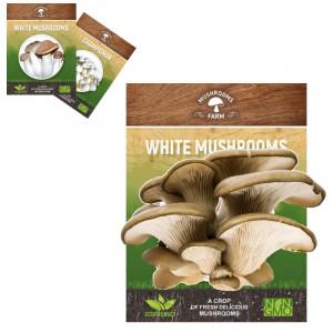 Грибы в коробке Mushrooms Farm